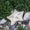 Фигурка из керамики Морская звезда-3 серия Wall Art
