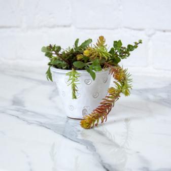 Керамический Горшок для растений Baby d55 Milk